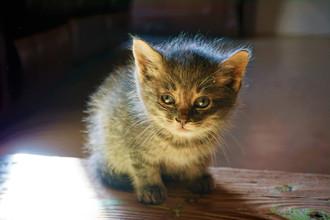 Cossyimages Kitten (29).jpeg