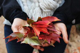 Cossyimages Autumn (62).jpg