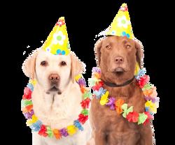 dogs-1190015_Clip
