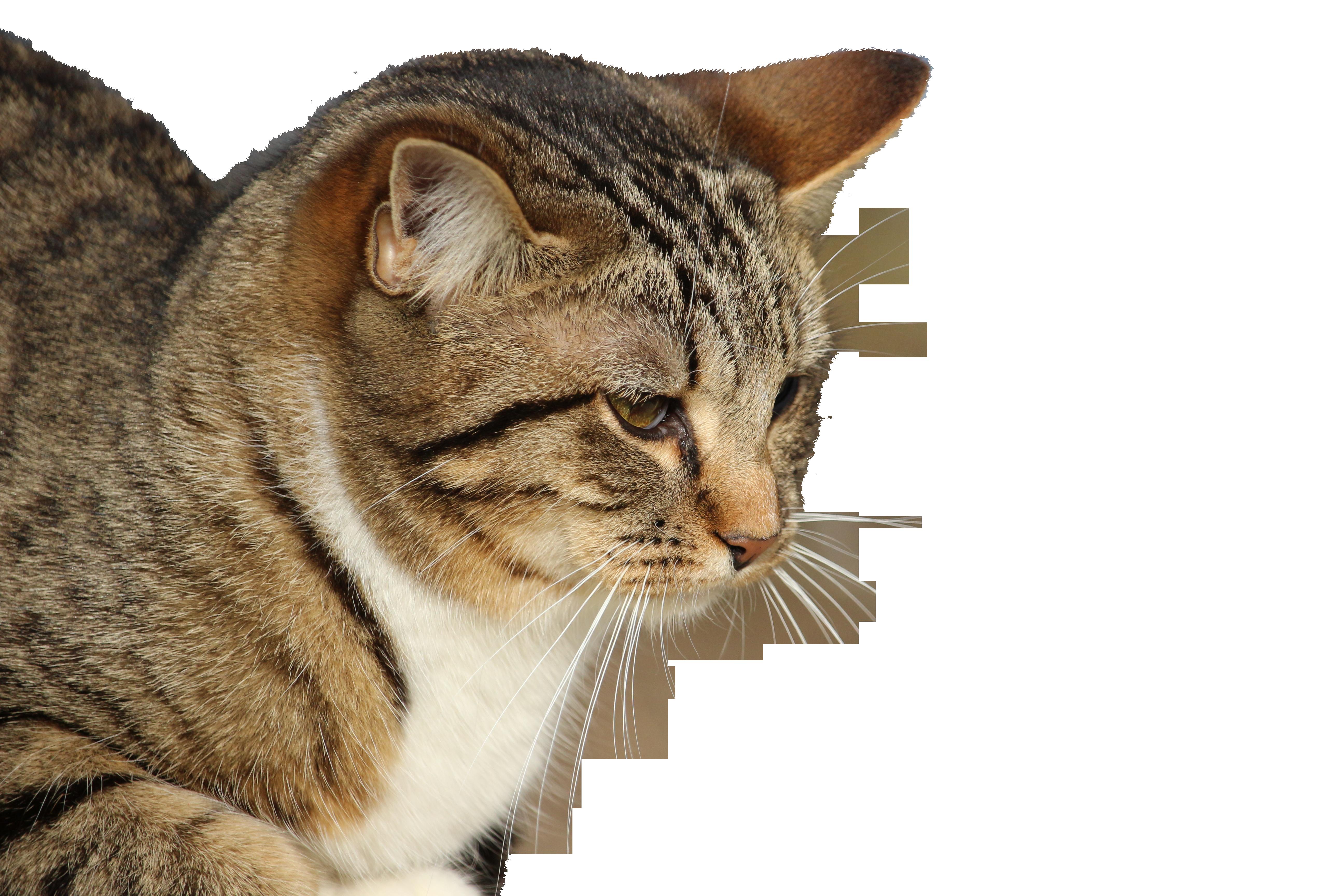 cat-1185010_Clip