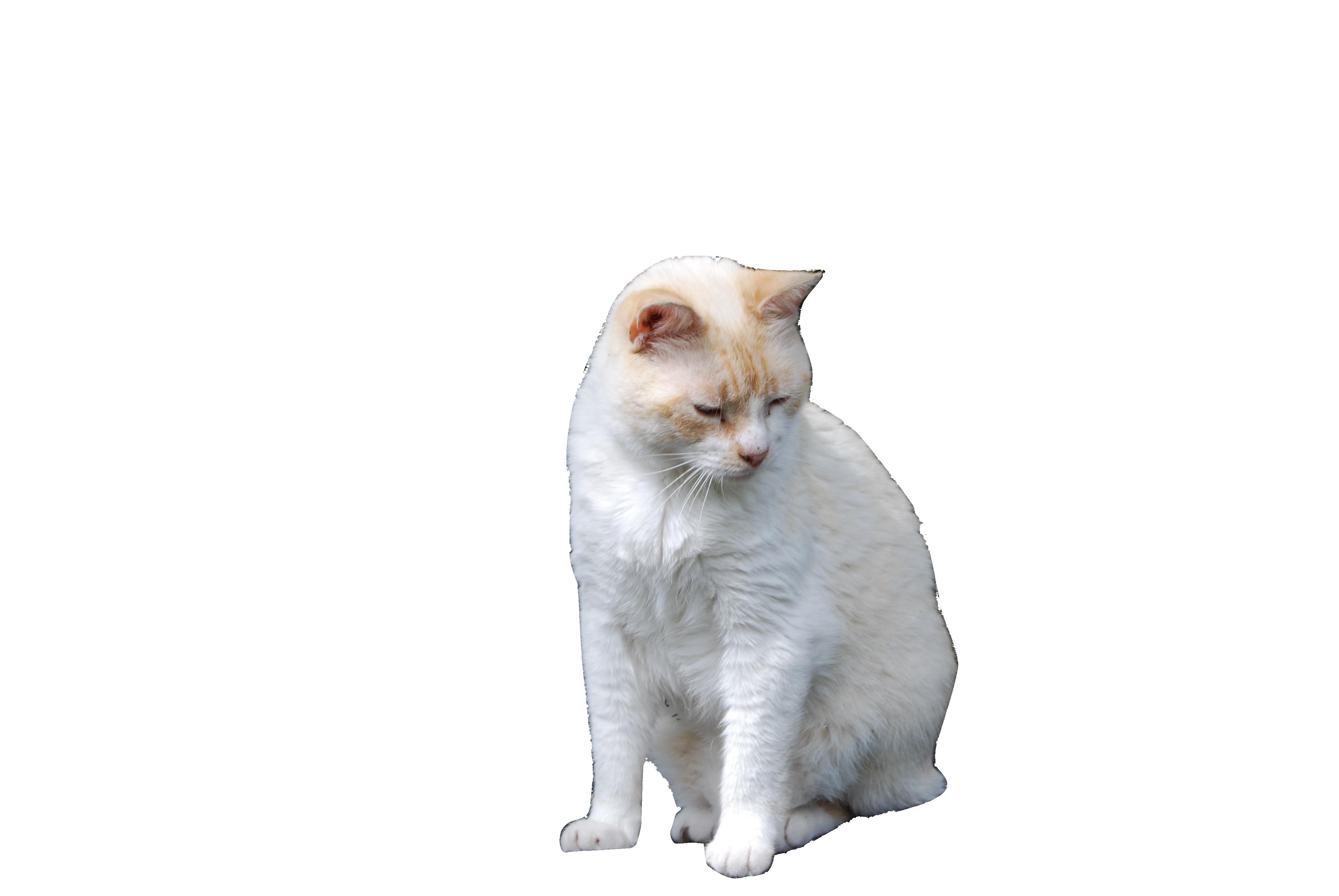 cat-1101747_Clip