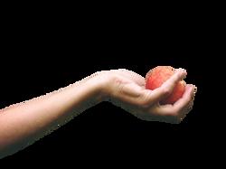 peach-812717_Clip