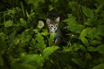 Cossyimages Kitten (60).jpeg