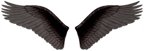 Wing-png-05