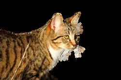 cat-1196303_Clip