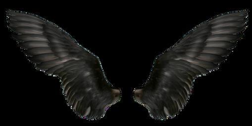 Wings-png-22