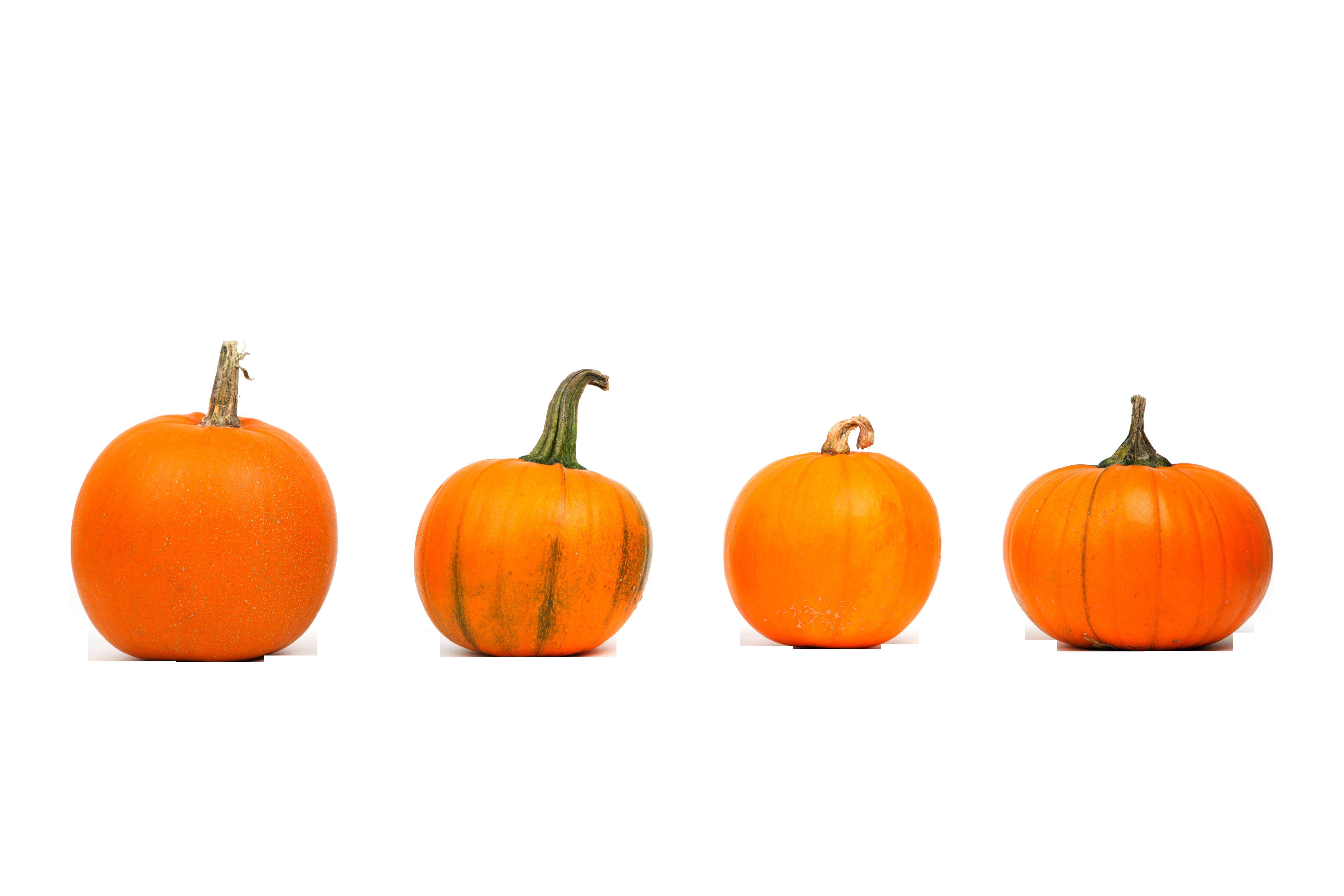 autumn-2905_Clip