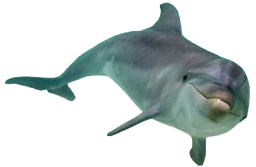 Dolphin PNG images