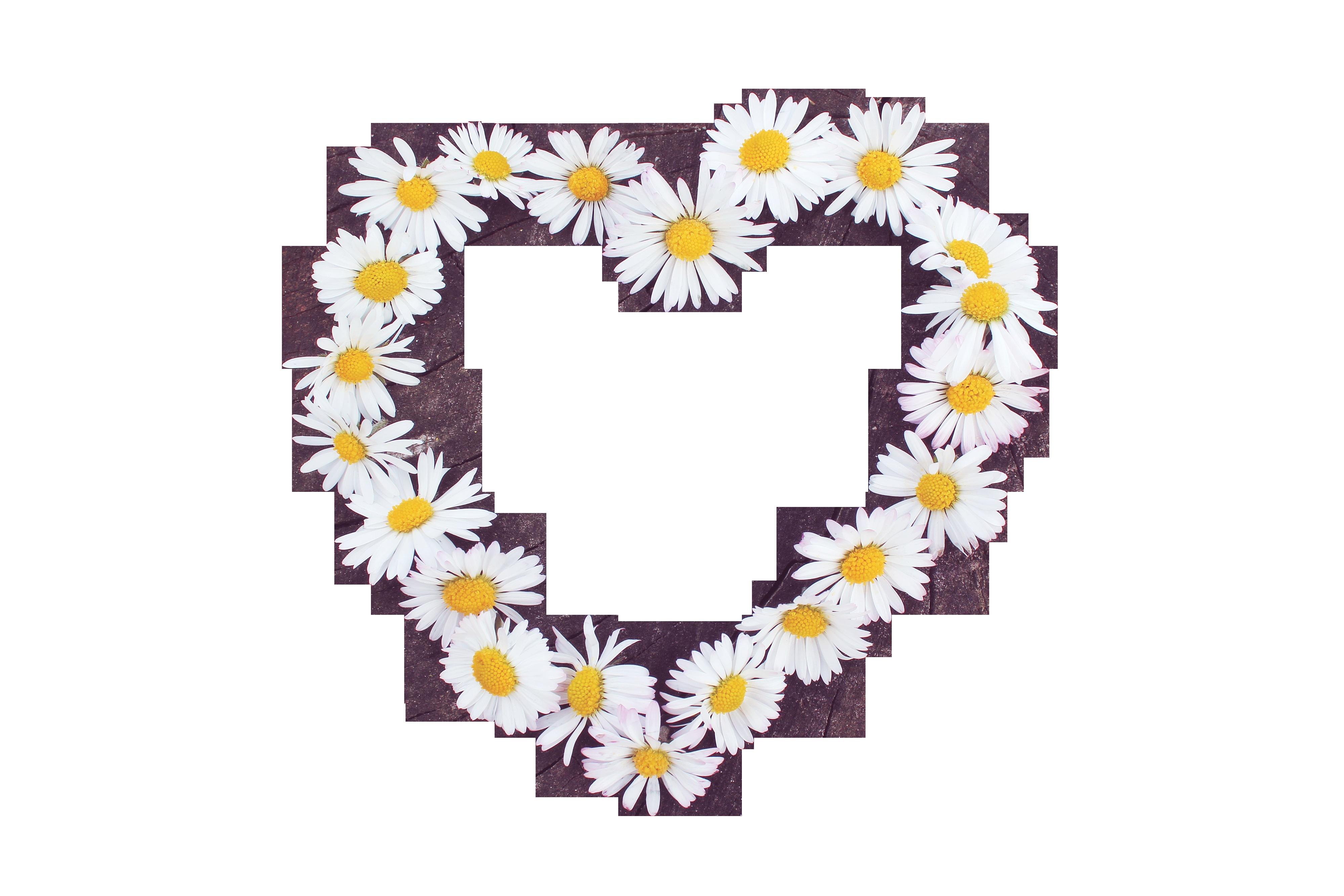 daisy-722281_Clip