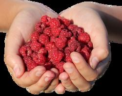 raspberry-995344_Clip