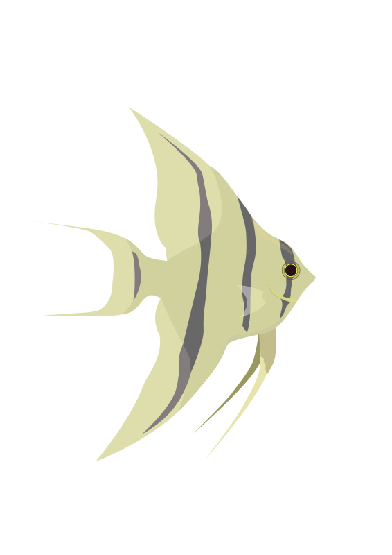 Fish_Angelfish