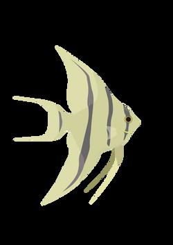Fish_Angelfish