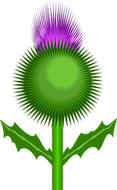 thistle-154145__340.png
