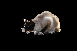 cat-1184794_Clip
