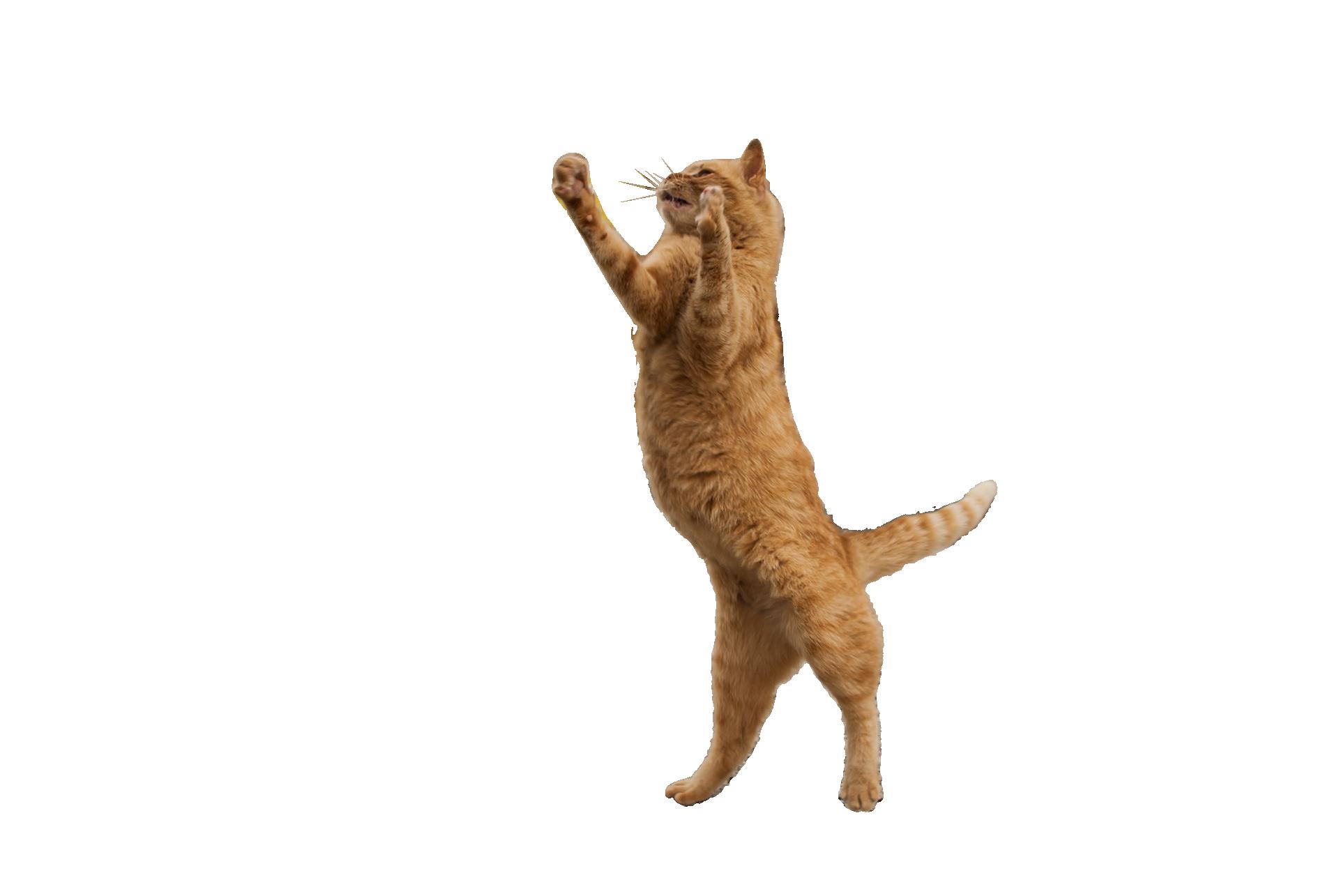 cat-457748_Clip