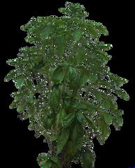 bush-1231928_960_720.png