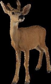 Free png deer images.