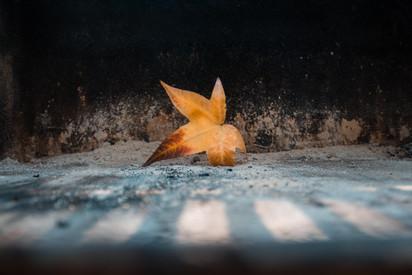 Cossyimages Autumn (59).jpg