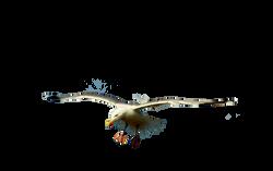 the-seagull-859529_Clip