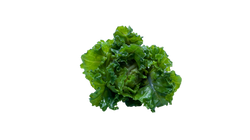 flower-sprout-823946_Clip