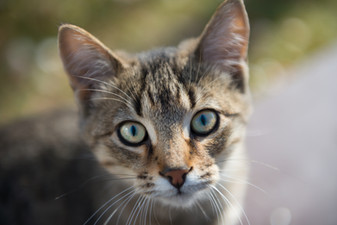 Cossyimages Kitten (81).jpeg