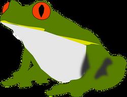 amphibian-2027859__340