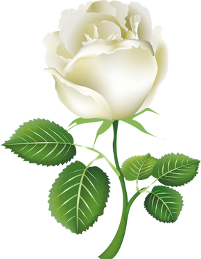 White rose, free pngs