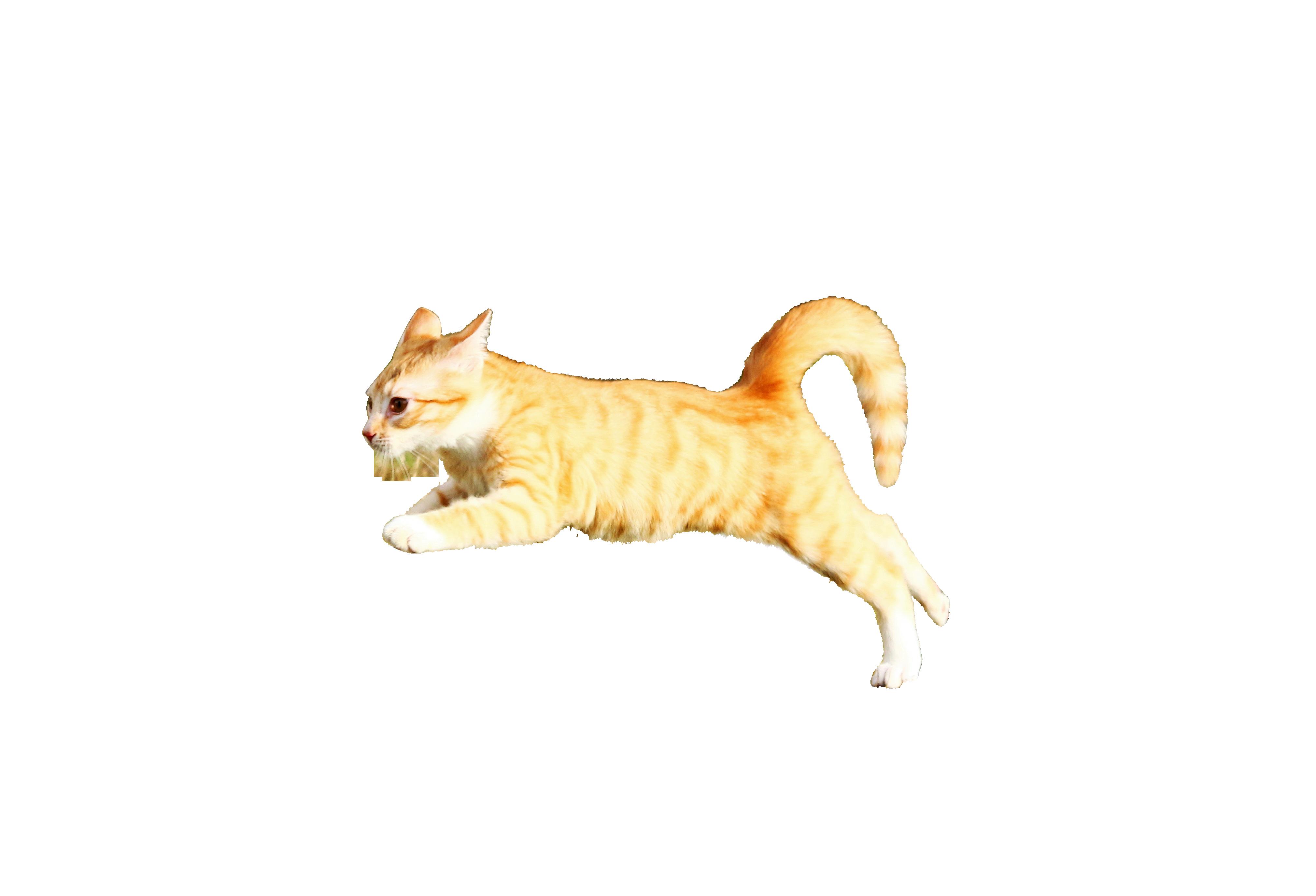 cat-1166190_Clip