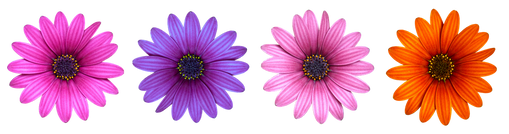 flower-2947856__340.png