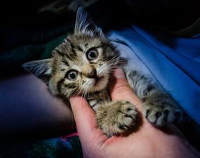Cossyimages Kitten (48).jpeg