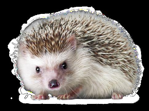Hedgehog PNGs