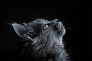 Cossyimages Kitten (89).jpeg