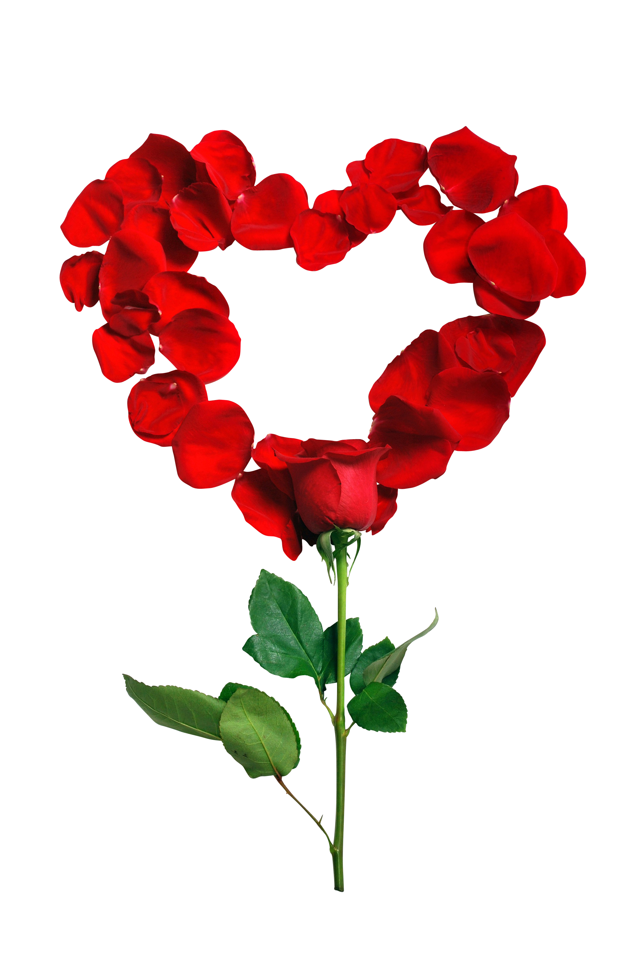 rose-1215314_Clip