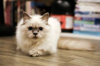 Cossyimages Kitten (41).jpeg
