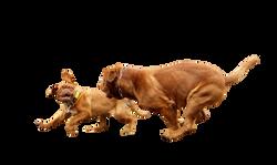 dog-734683_Clip