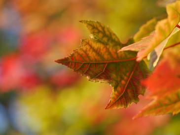 Cossyimages Autumn (51).jpg