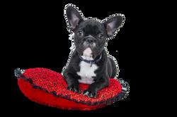 bulldog-1047518_Clip