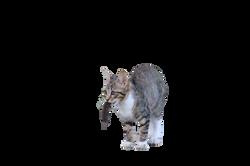 cat-904787_Clip