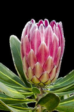 blossom-829739_Clip