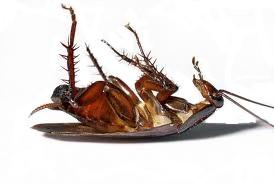 Roach free PNGs