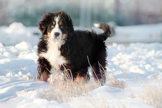 Cossyimages Puppy (19).jpg