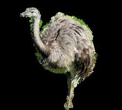 rhea-bird-853630_Clip