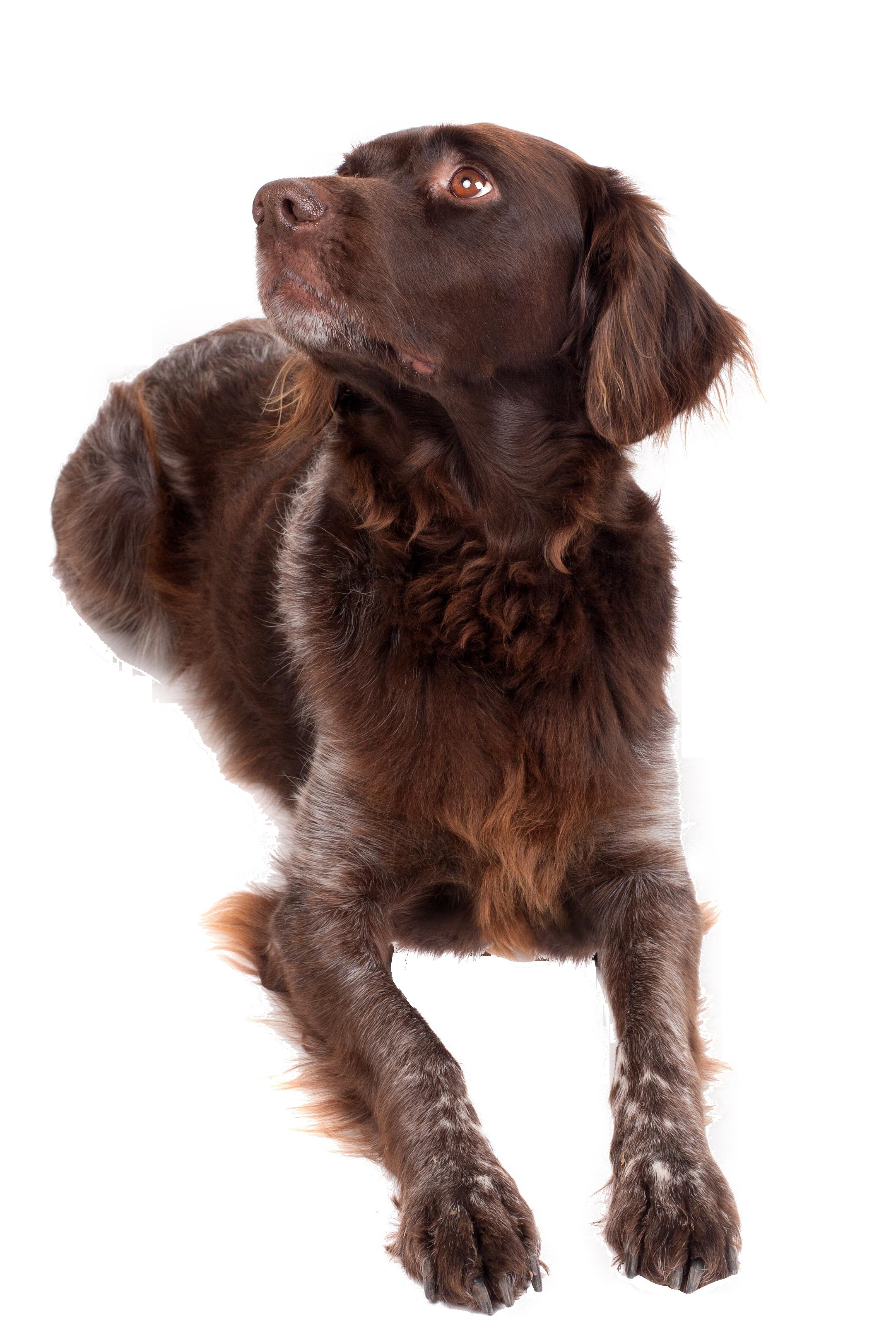 dog-1192031_Clip