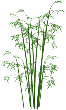 Bamboo (3).png