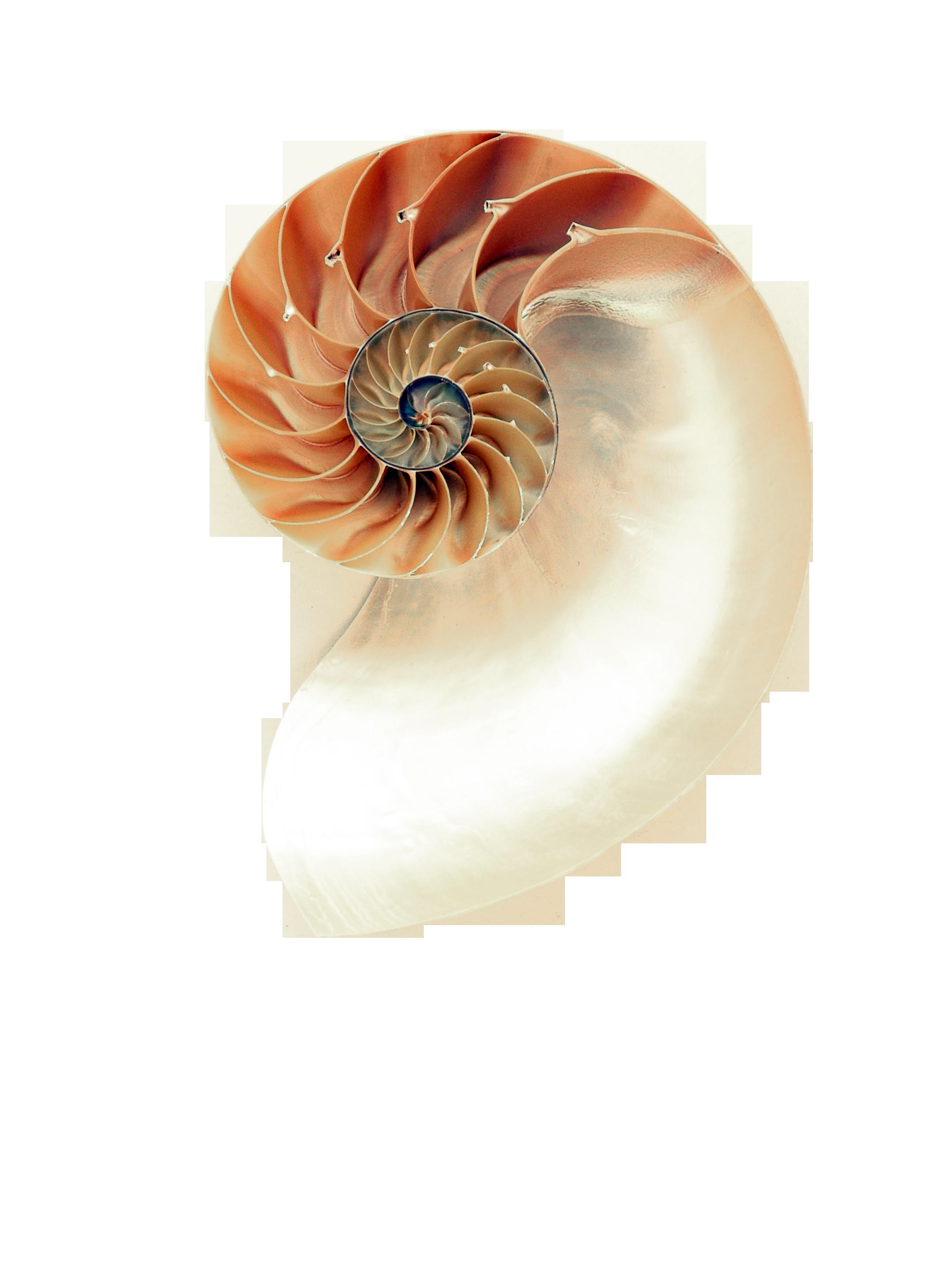 nautilus-1029360_Clip