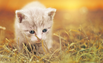 Cossyimages Kitten (15).jpg