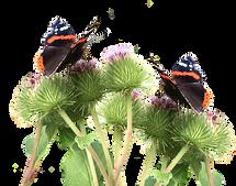 butterflies-2901132__340.png