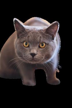 cat-165068_Clip