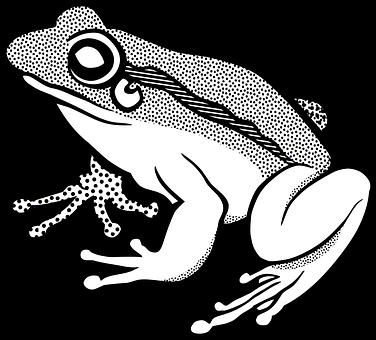 amphibian-1295171__340
