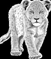 leopard-48381__340.png